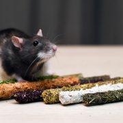 szczur-ham-stake-gryzaki-leszczynowe-z-posypka