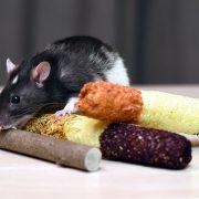 szczur-ham-stake-przysmak-kukurydziany-z-leszczyna