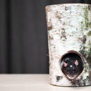 szczur-ham-stake-tunel-brzozowy-xxl-2