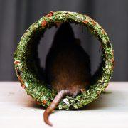 szczur-ham-stake-tunel-warzywno-ziolowy-2