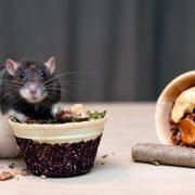 szczur-ham-stake-wafel-zbozowo-orzechowy-i-owocowo-warzywny