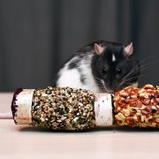 szczur-ham-stake-naturalny-pasnik-zbozowo-warzywny